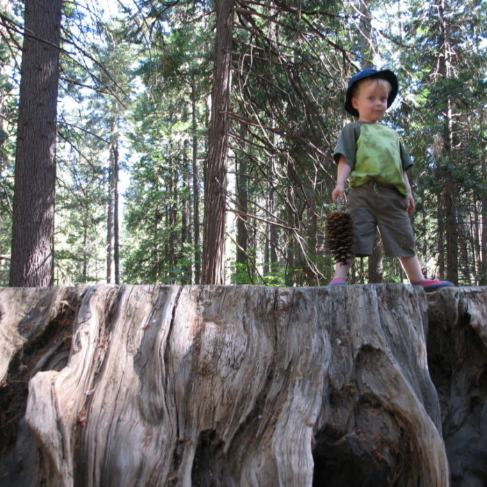 On top of the Big Stump